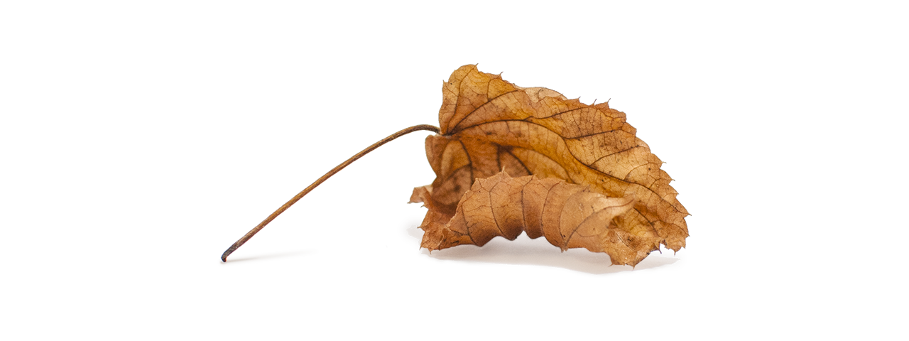 Hösten slår mig så hårt  ©Janne A