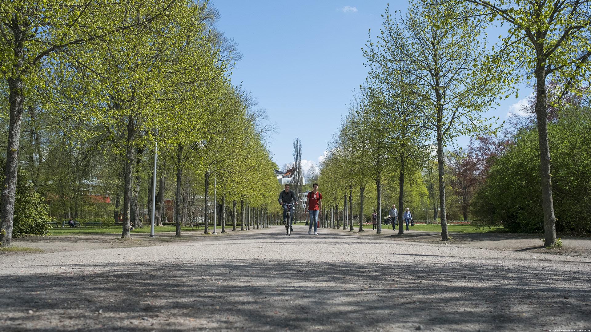 Linnéparken i Växjö |©Janne A
