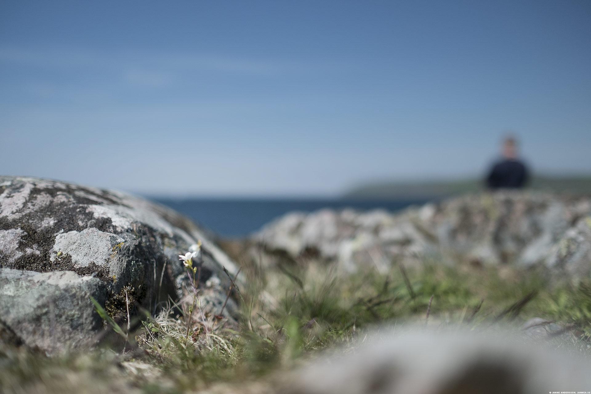 Naturreservatet Stora Lund | © Janne A