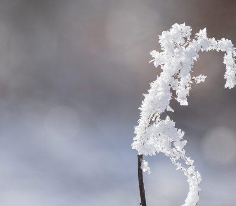 Kallt, frost och vinter © Janne A