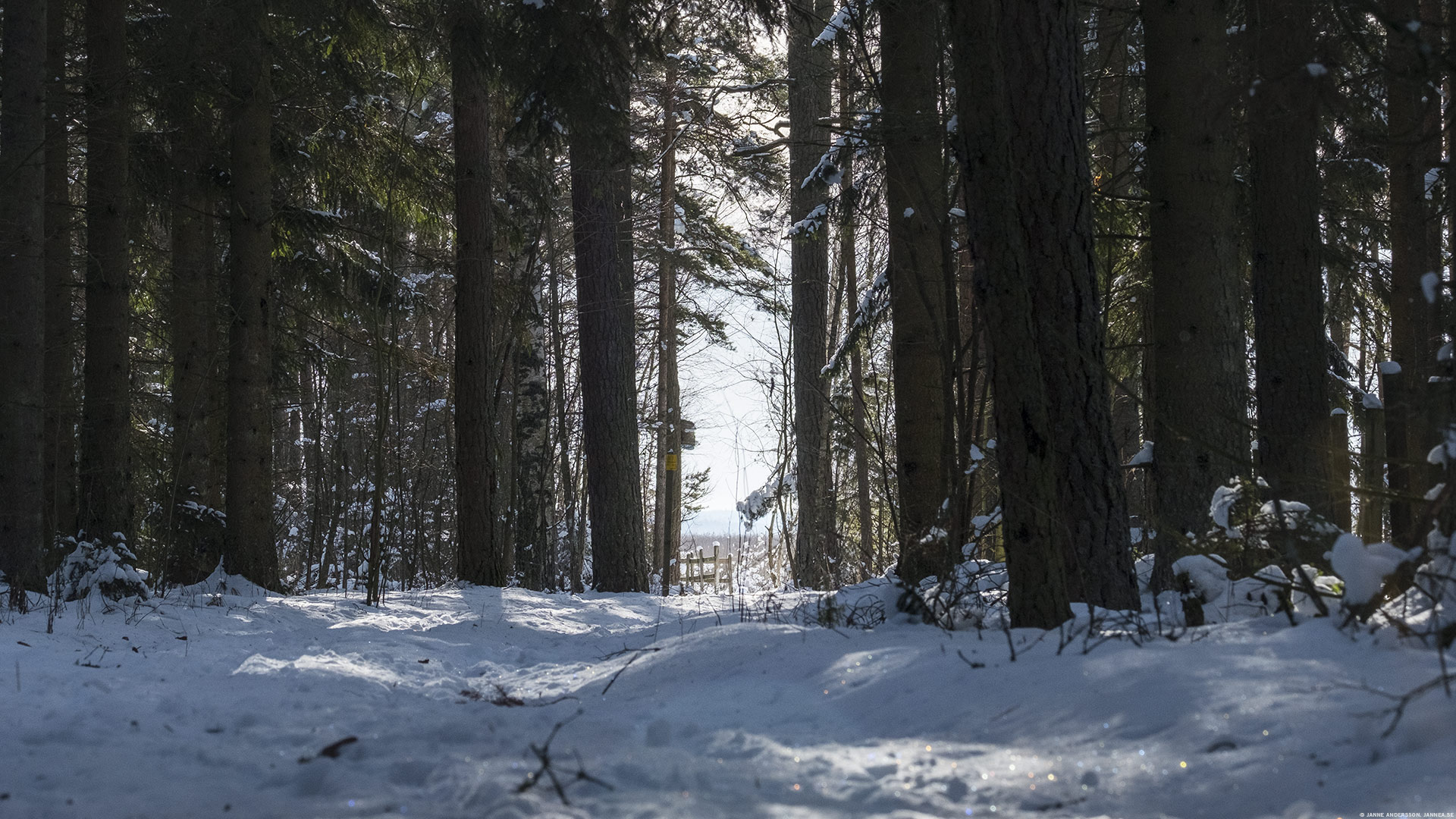 Skogen ute vid Svälinge, Vadstena  ©Janne A