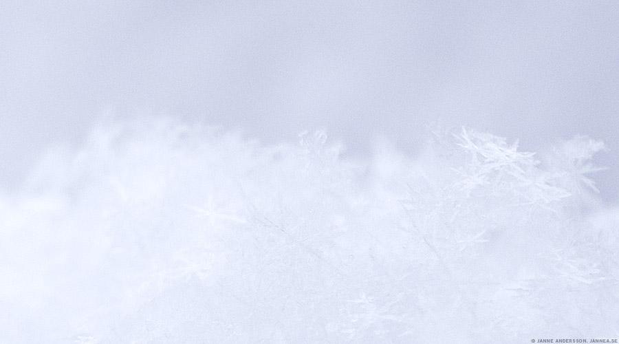 Snowy |© Janne A