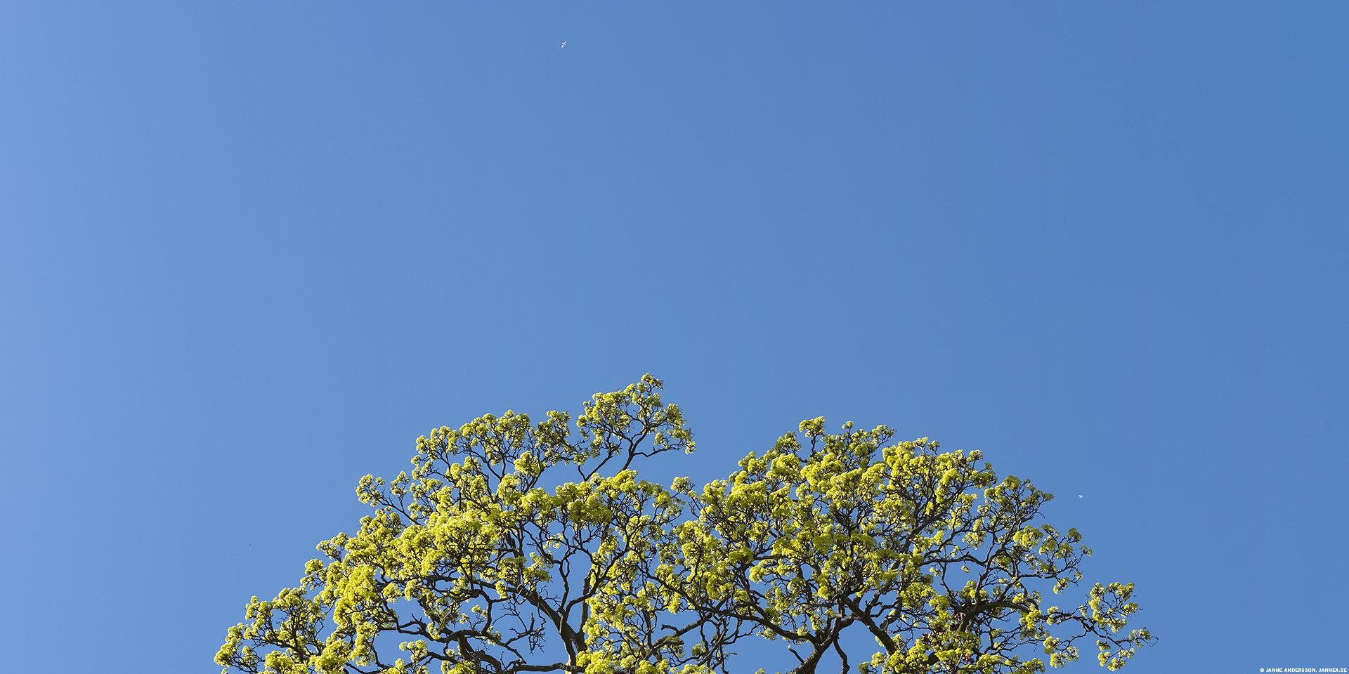 Vårkänslor och blå himmel |©Janne A