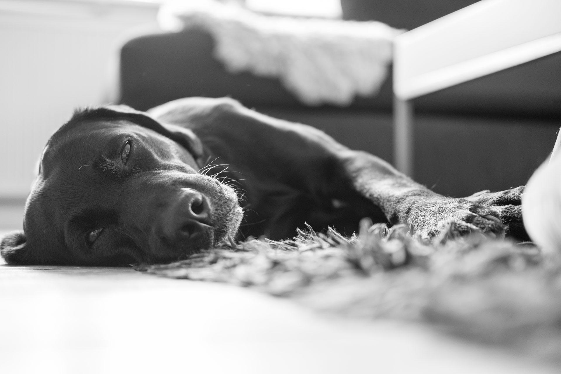 Piraya vilar lite |© Janne A