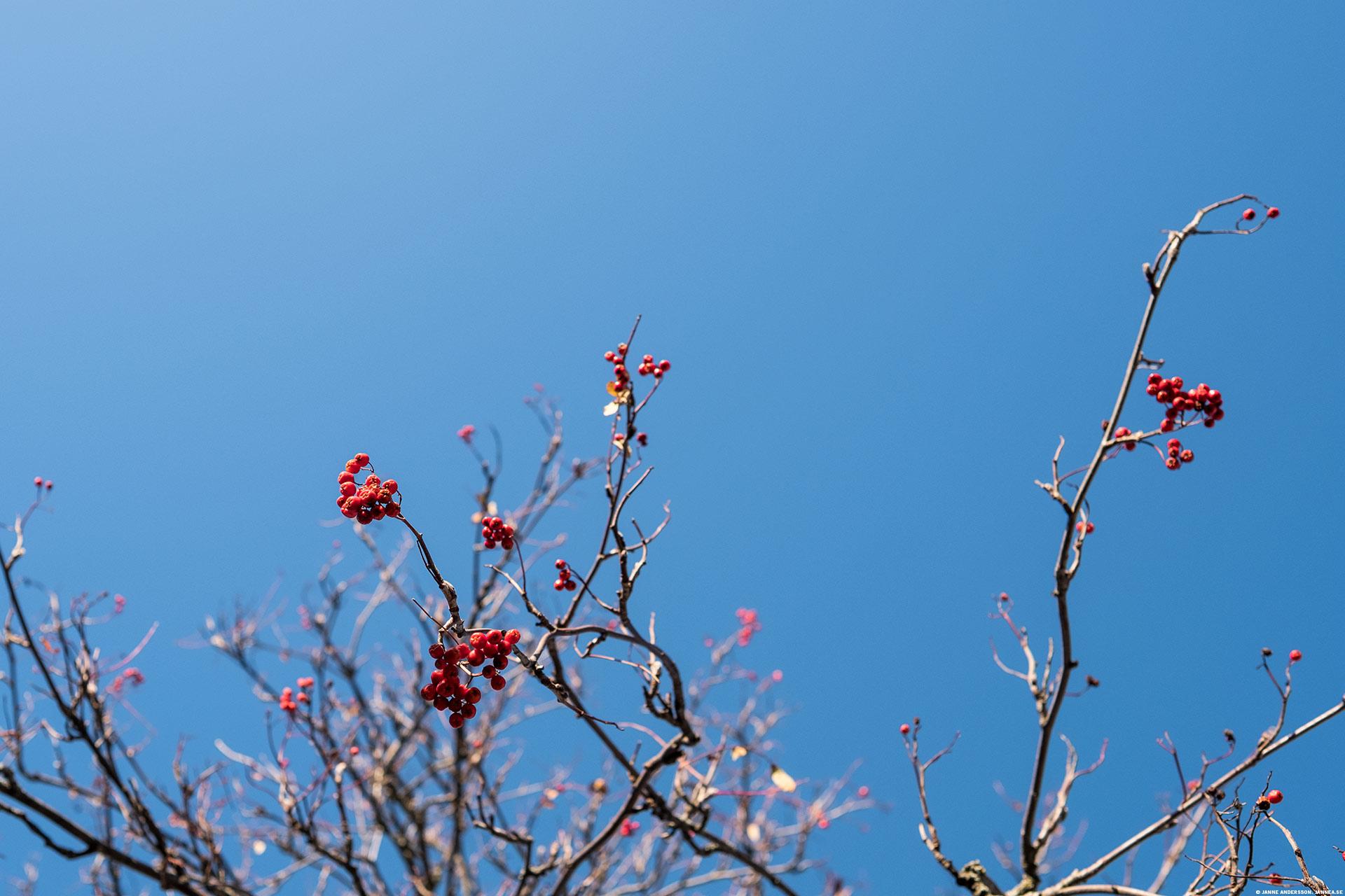 En blå himmel istället för en grå | © Janne A