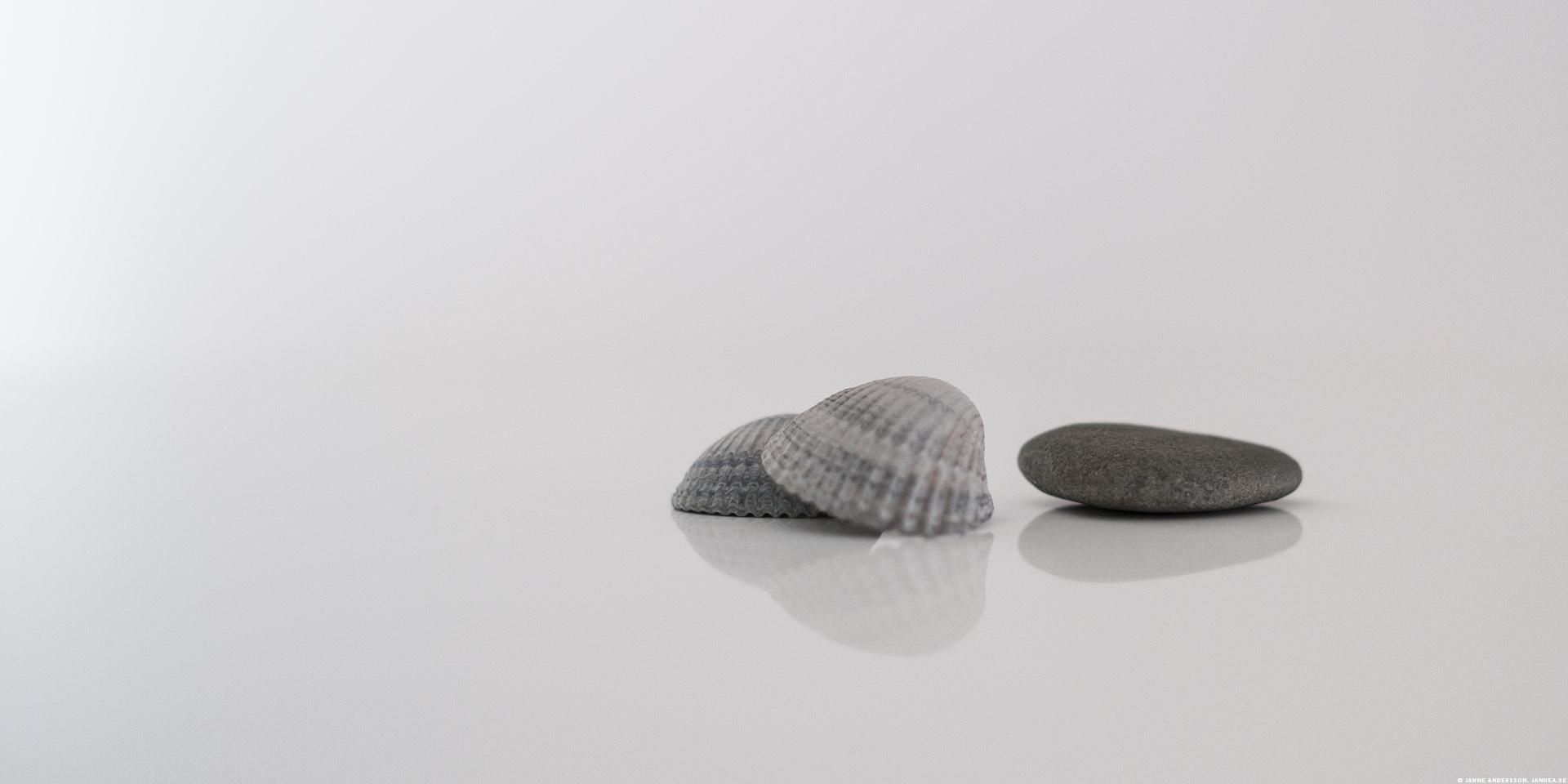 Fler stenar (snäckor) till samlingen |© Janne A