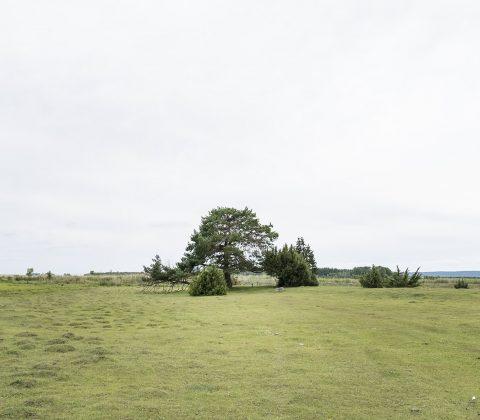 Ett träd på slätten| ©Janne A