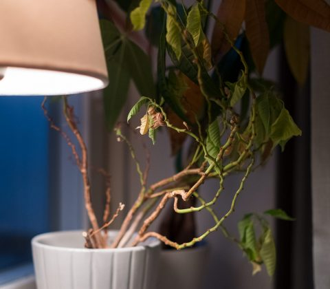 Mina stackars växter hatar mig| ©Janne A