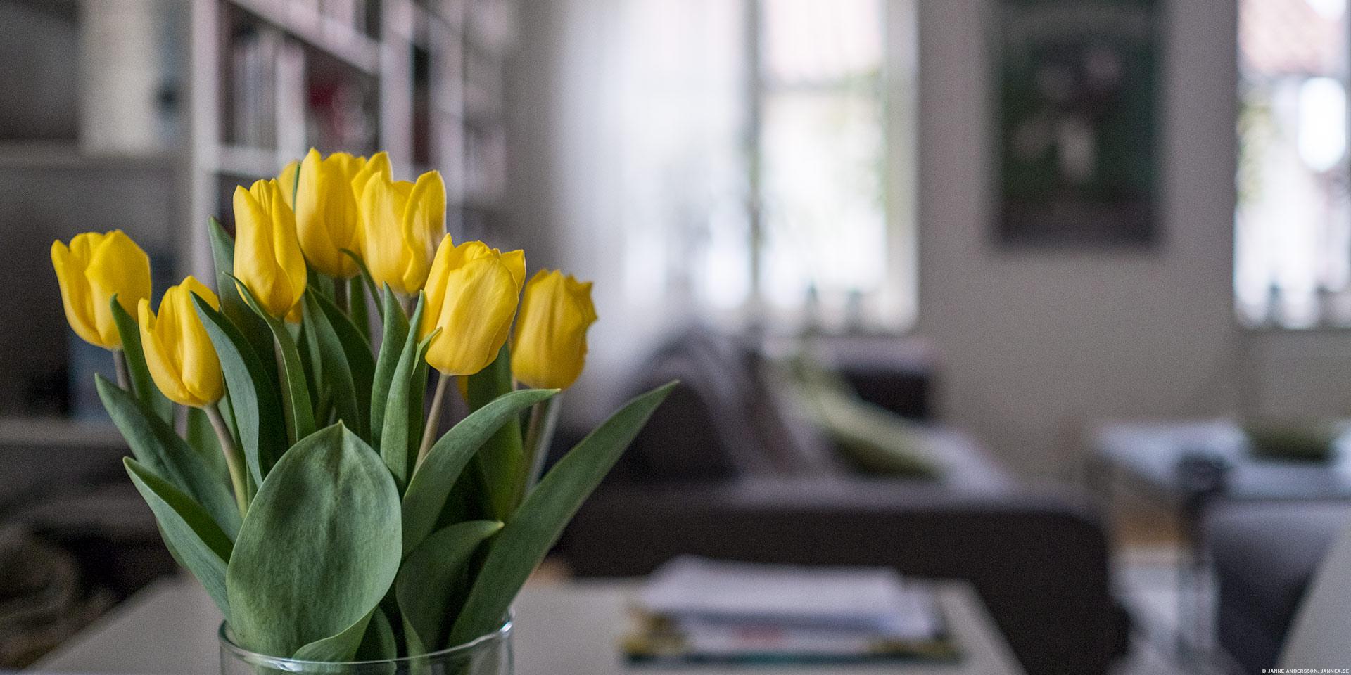 Tulpaner på köksbordet |©Janne A