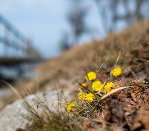 Vårens små tecken | © Janne A