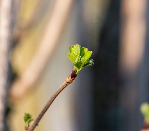 Vårens första lilla grönska |© Janne A