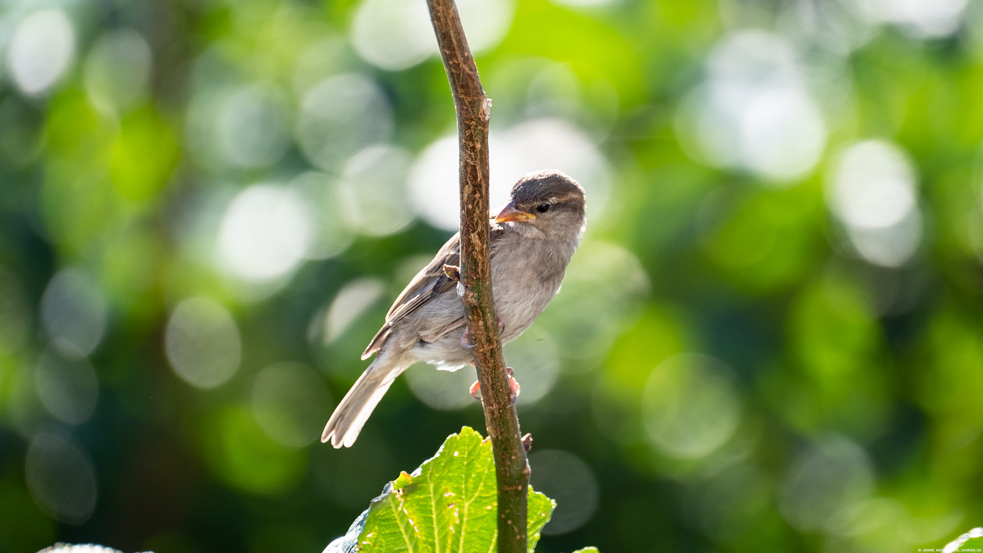 Under parasollet på terrassen. Fåglar! | © Janne A