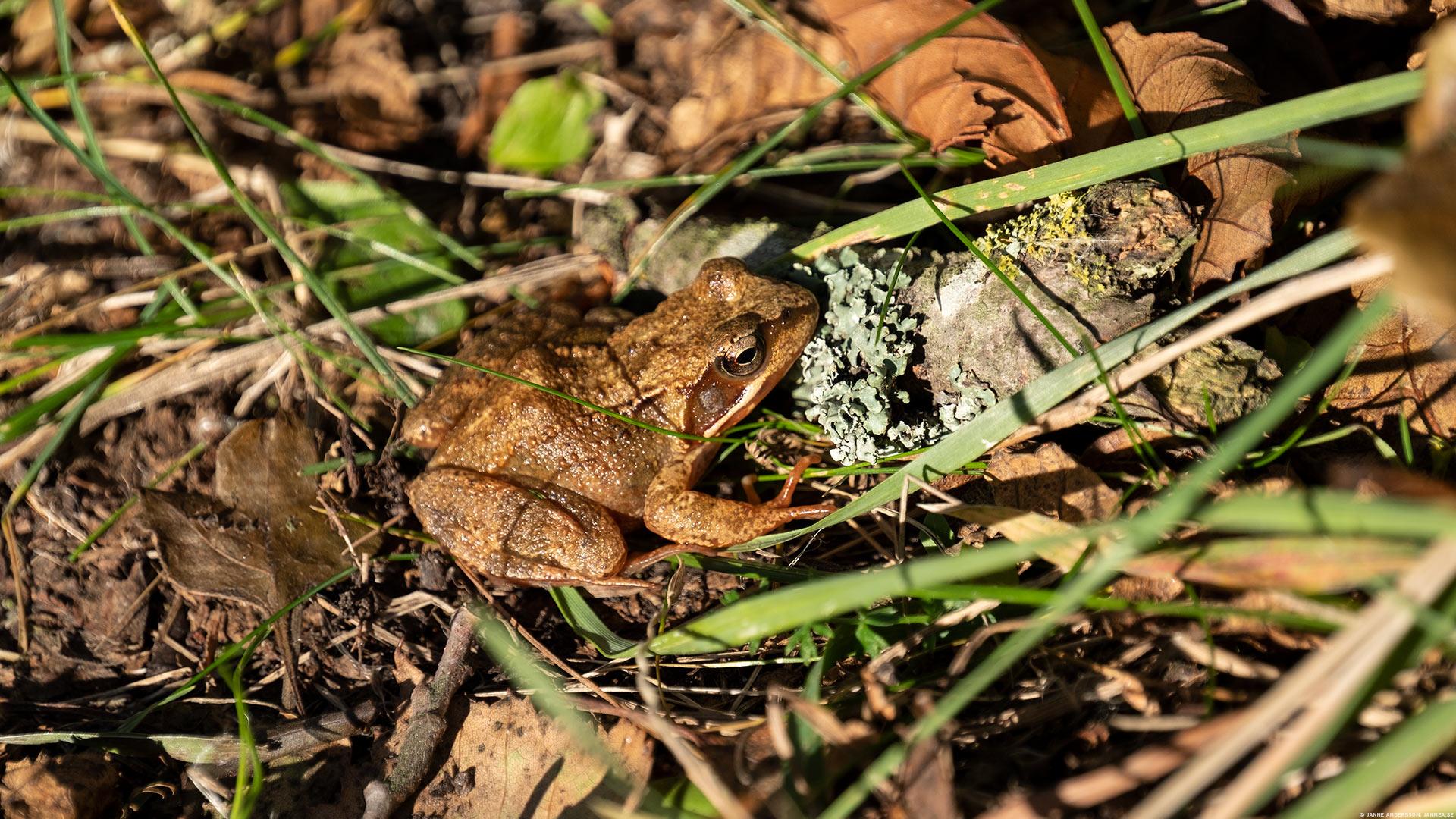 En groda och en höstpromenad ute i naturen | © Janne A