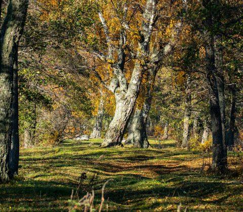 Höstpromenad ute i naturen | © Janne A