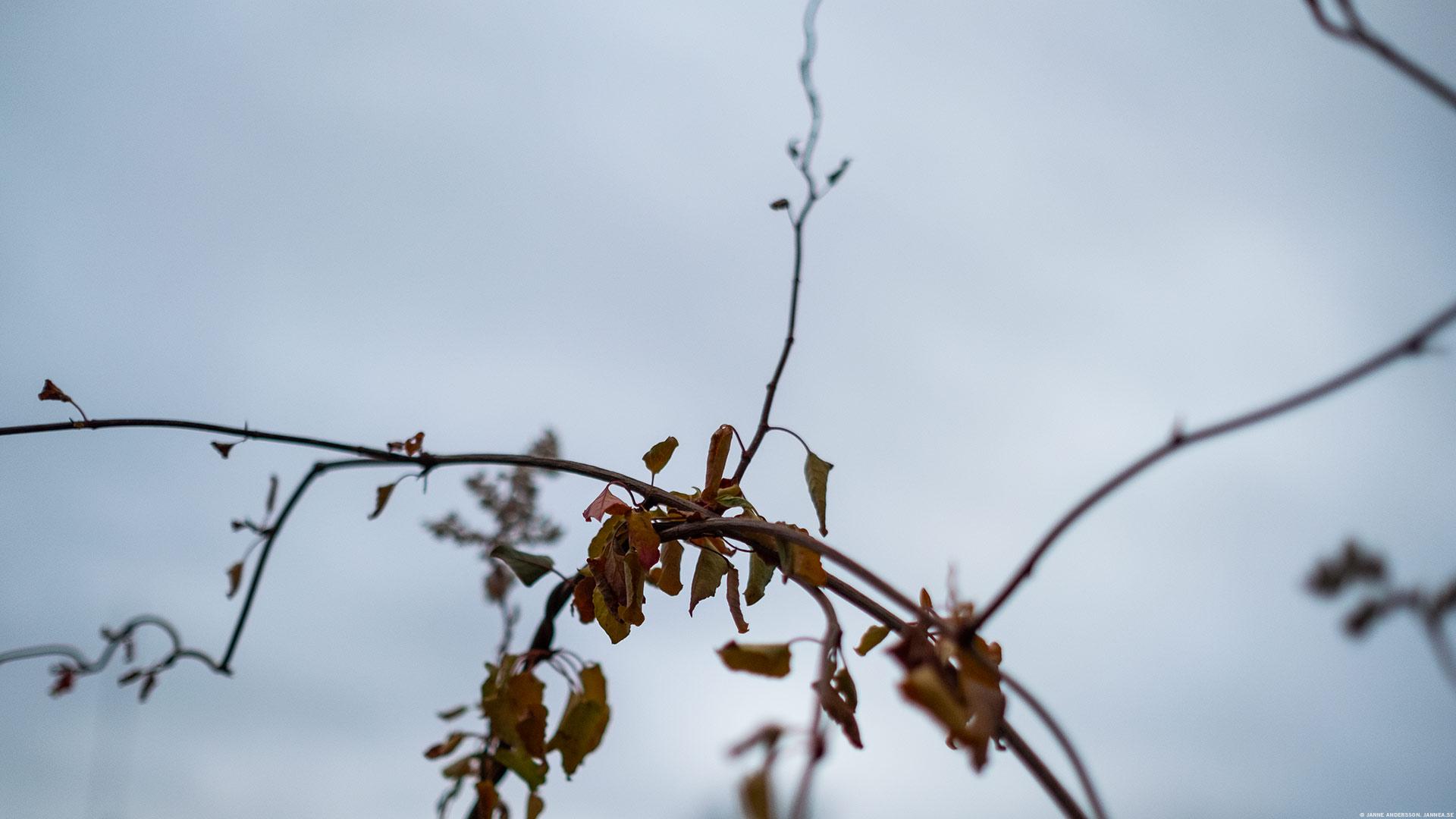 Höstrugg och höstens sista dödsryckningar | © Janne A