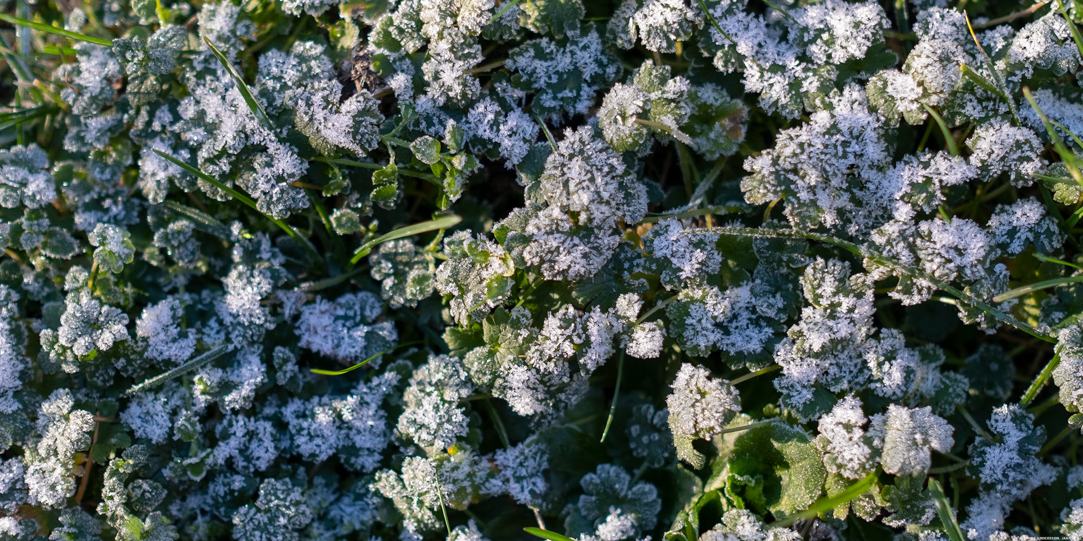 Frost i gräset och solsken i blick |© Janne A