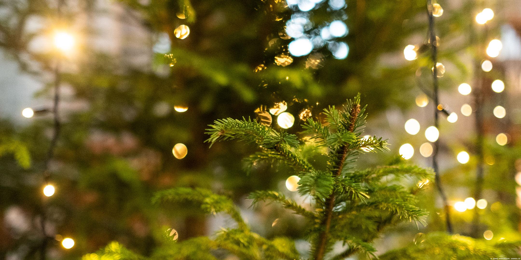Julgran och belysning |© Janne A