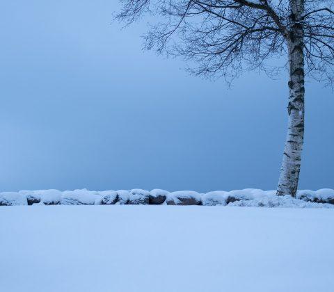 Träd vid sjö - i februari | © Jan Andersson