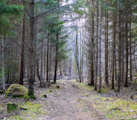 Skön söndag och en promenad i naturen  © Jan Andersson