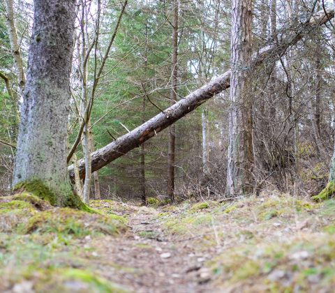 Skön söndag och en promenad i naturen |© Jan Andersson