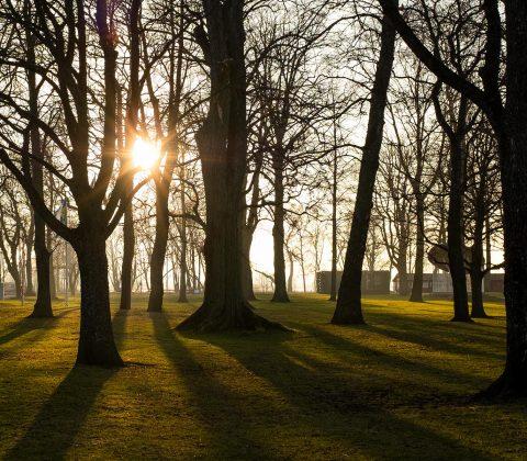 Hamnparken och soliga träd |© Jan Andersson
