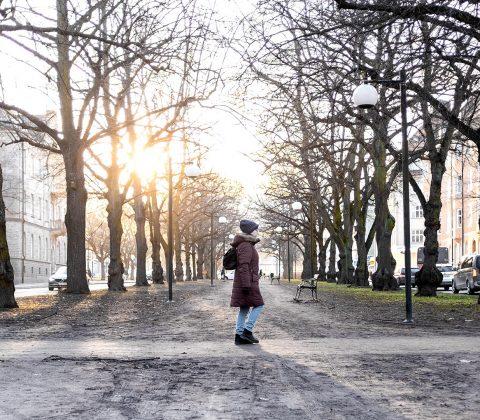 En liten tant i solen mellan träden |© Jan Andersson