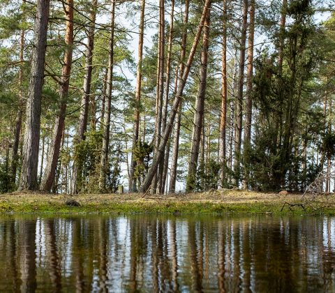 Träd som reflekteras i sankmark i skogsparti |© Jan Andersson