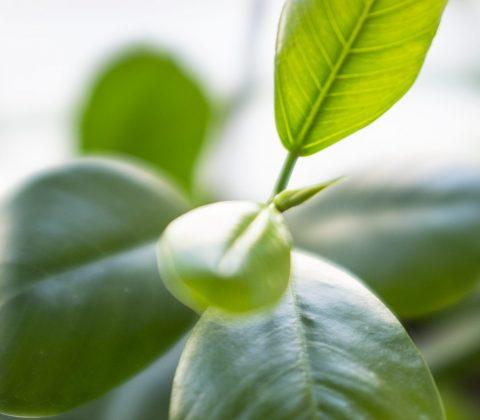 Ett par gröna växter till fönstret |©Jan Andersson