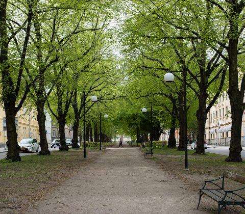 Vasavägens trädallé |© Jan Andersson