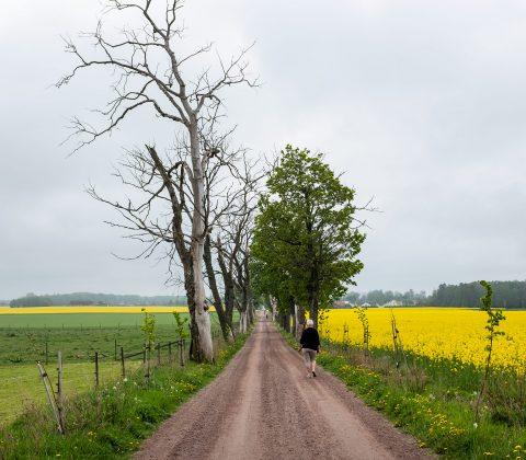 Tycklinge allé och färgglada fält |© Jan Andersson