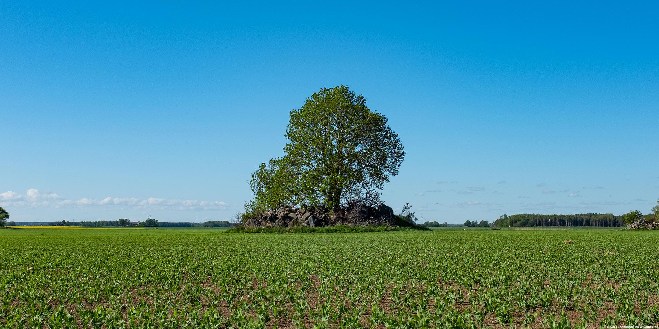 Som en ö, fast på ett fält |© Jan Andersson
