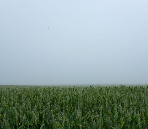 Fält och dimma |©Jan Andersson