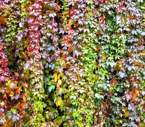Höstens alla färger på en gång |©Jan Andersson