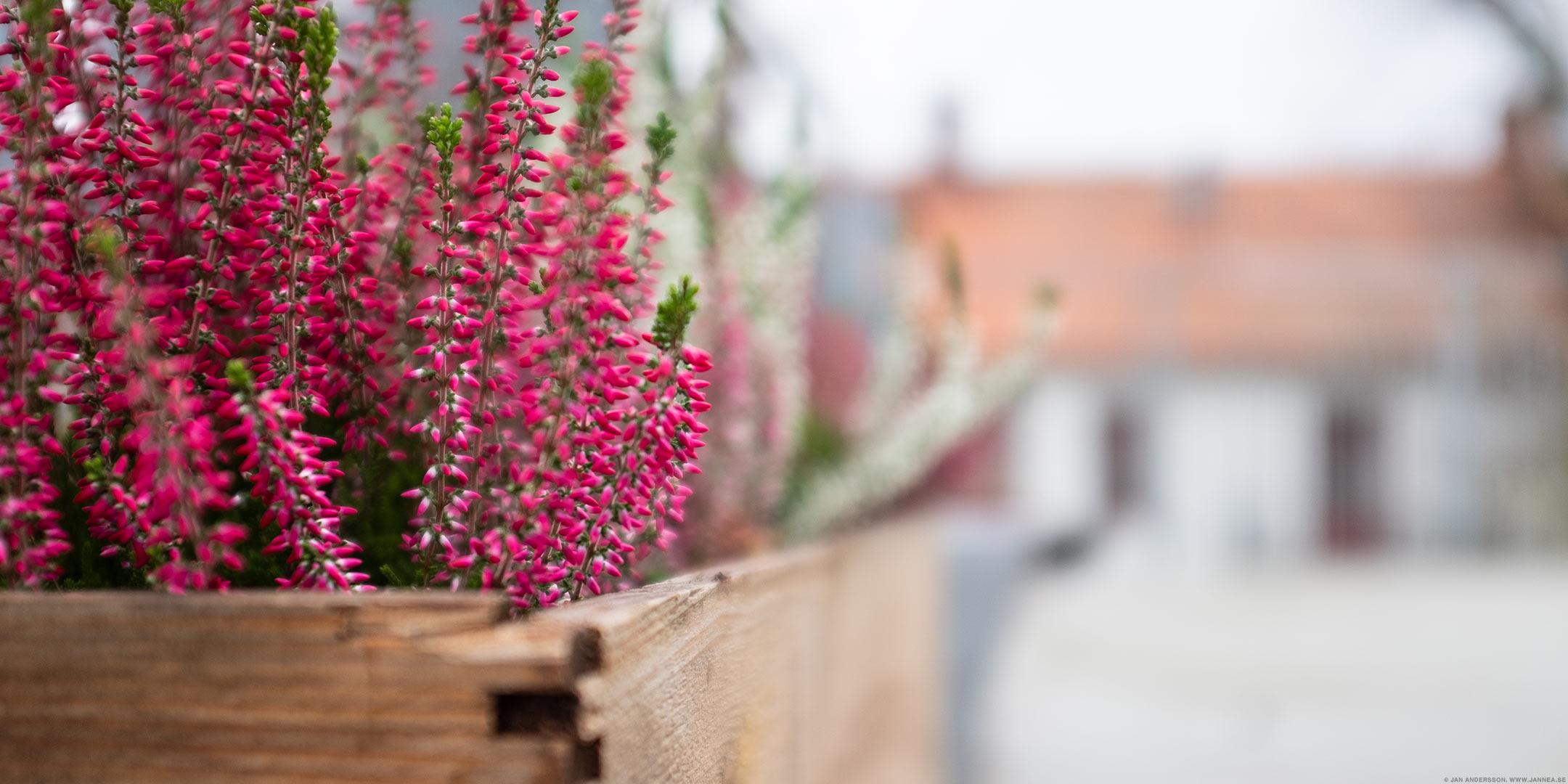 Höstfint på terrassen |© Jan Andersson