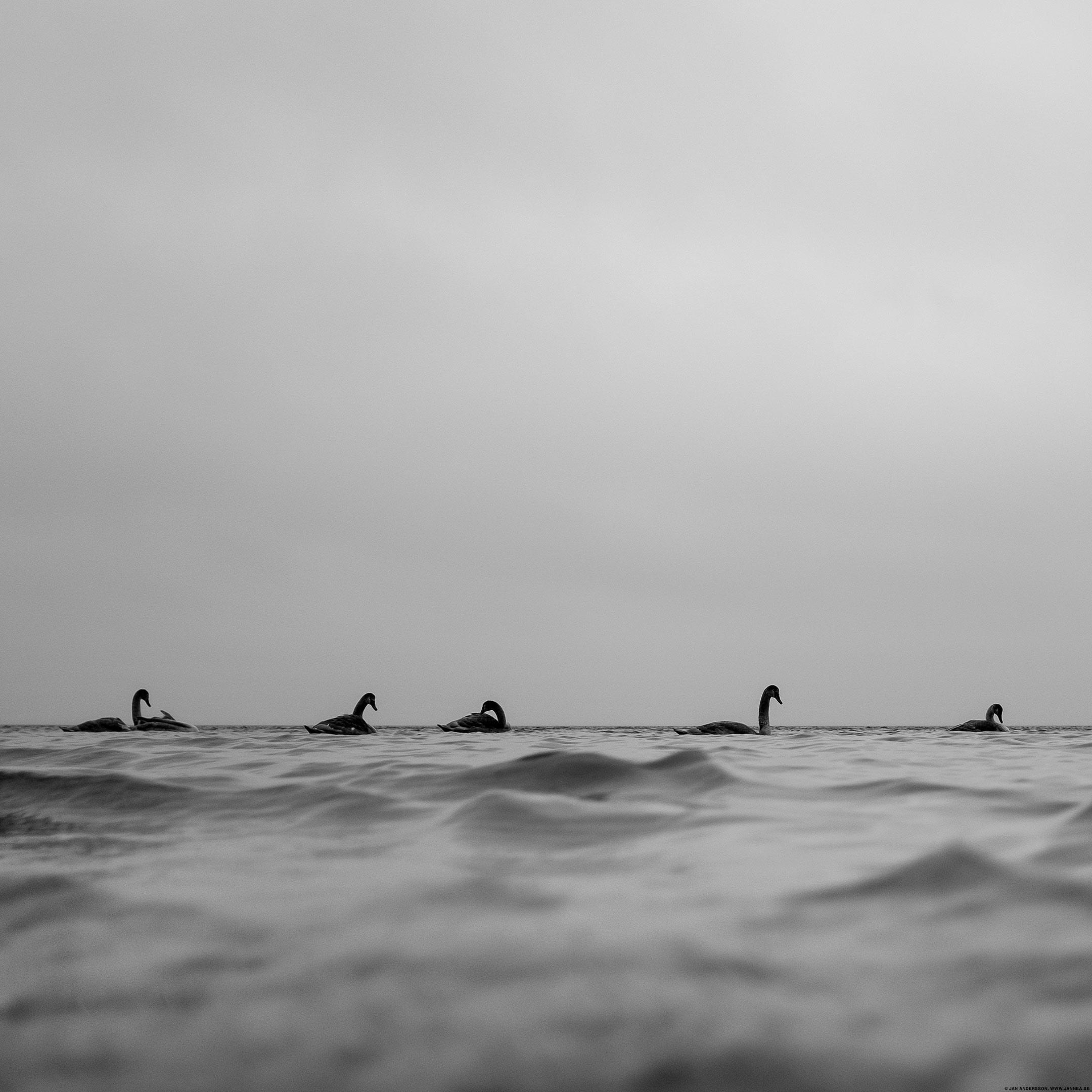 Regnrocken är i alla fall ett väldigt bra skydd mot november|© Jan Andersson