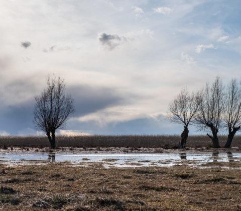 Träd i vatten. Från en månad sedan