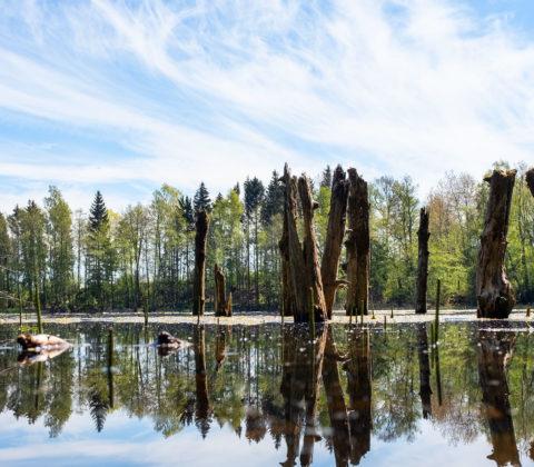 Naturlördag och en liten skogssjö