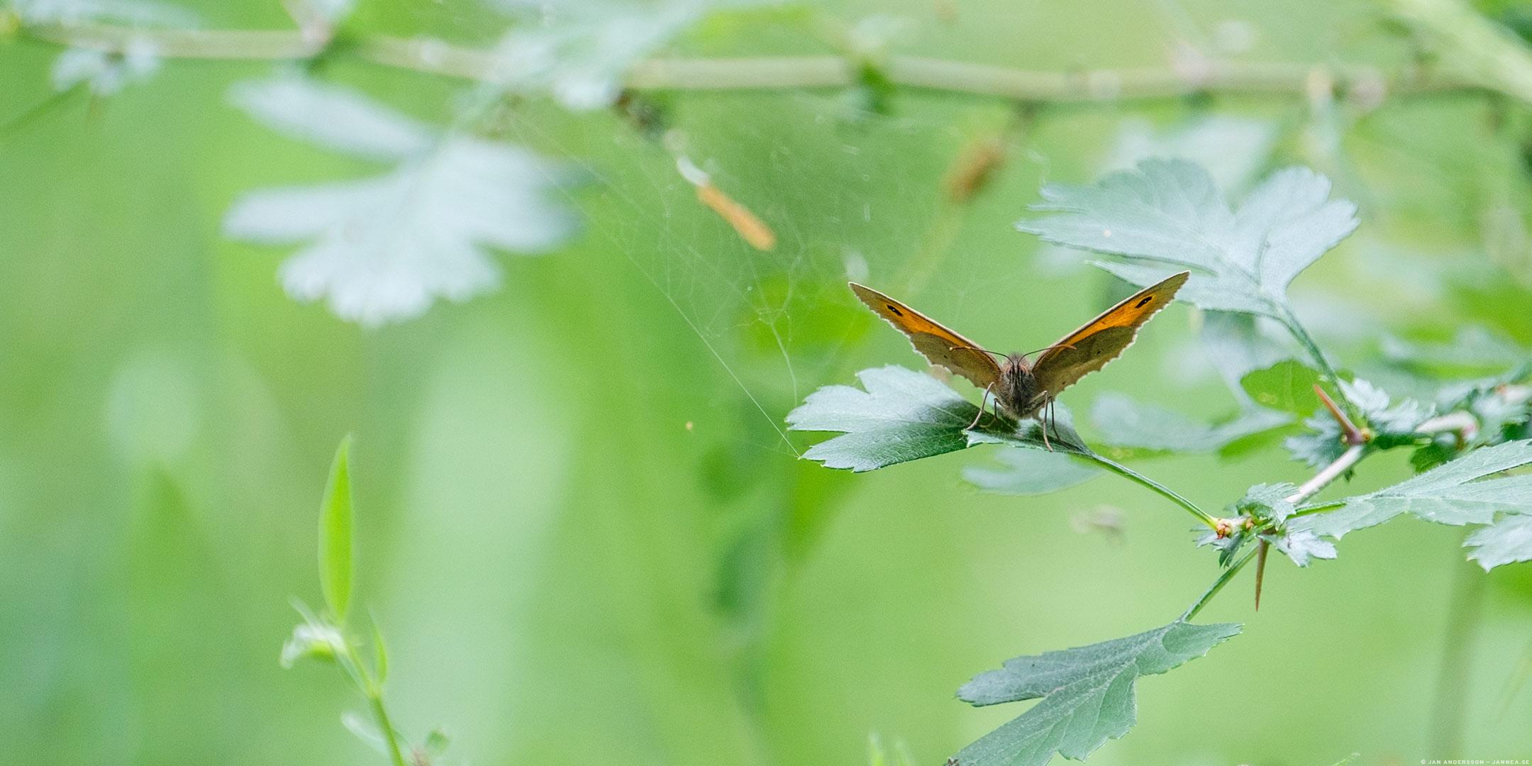 Irriterande insektsjävlar